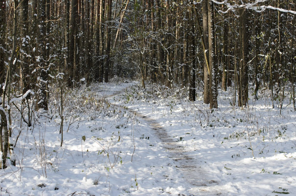 snowy forest in November