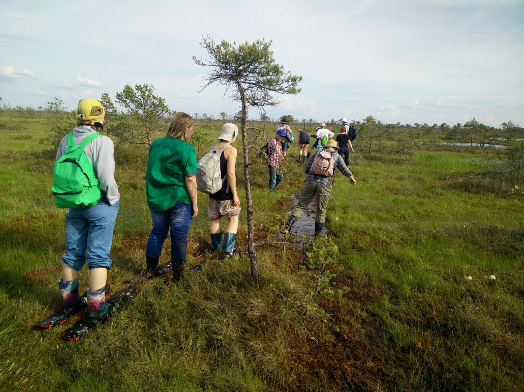 group of people hiking across the bog