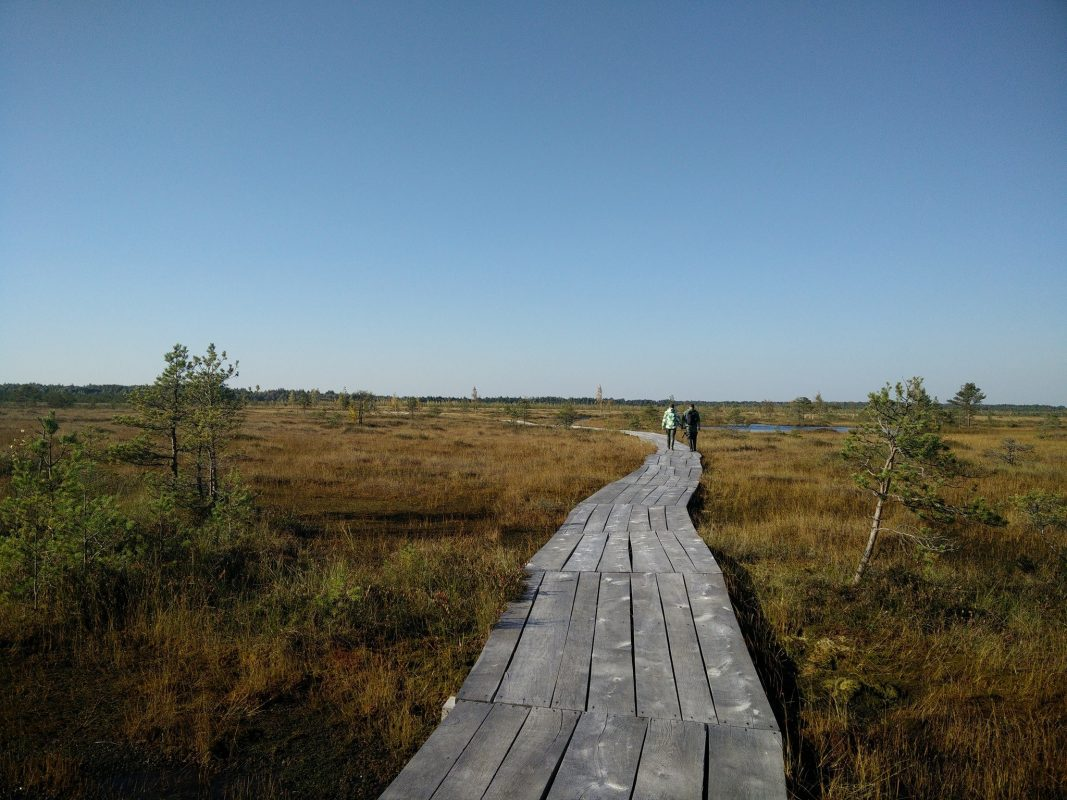 two people are hiking across the bog